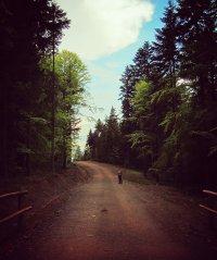 Beskidzka leśna droga