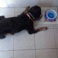 pies przy misce